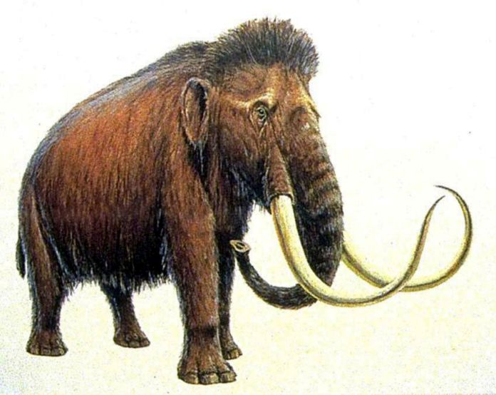 Mammoth penis found on Norfolk beach