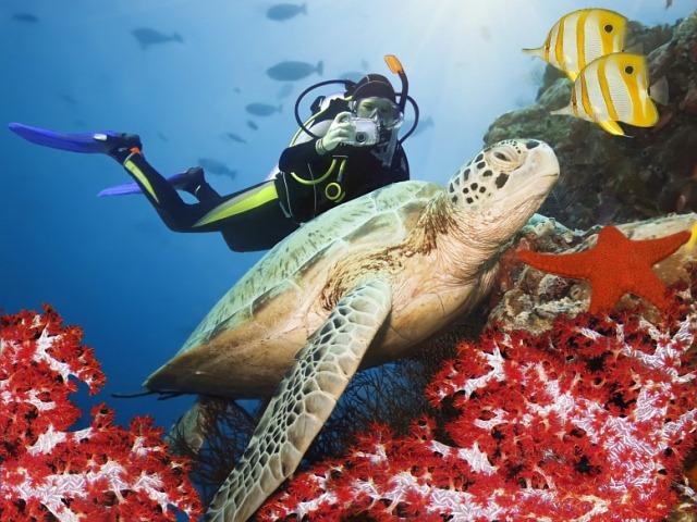 Places For Scuba Diving
